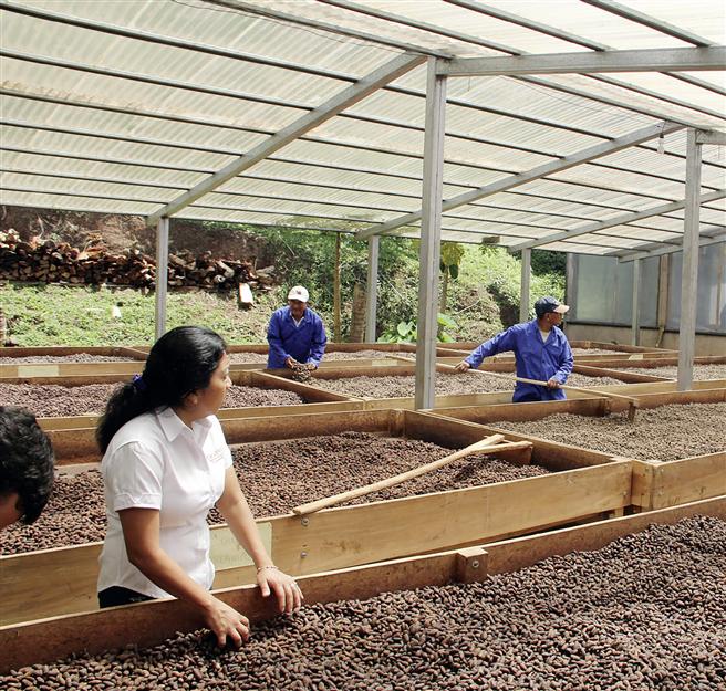Trocknung der Kakaobohnen bei einer Kooperative. Foto: © Ritter-Nieragden.com