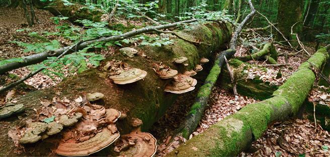 Das perfekte Zusammenspiel im Wald geht über eine Kreislaufwirtschaft hinaus, denn es werden neue, zusätzliche Ressourcen aufgebaut © Rainer Kant