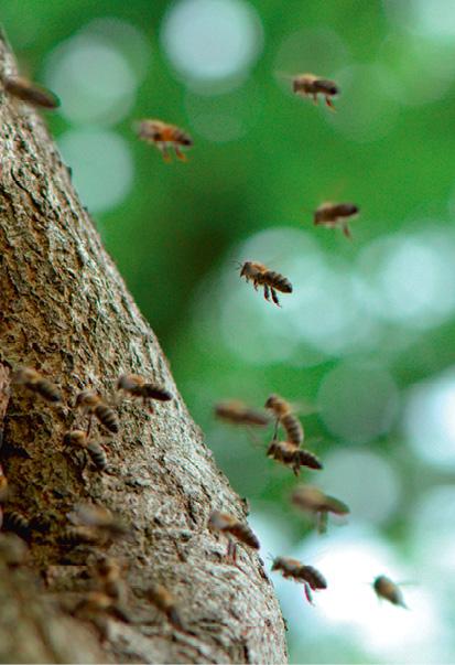 Der Wald bietet ein Netzwerk symbiotischer Beziehungen und ist damit Lebensgrundlage für Pflanzen, tiere und Menschen. © Rainer Kant