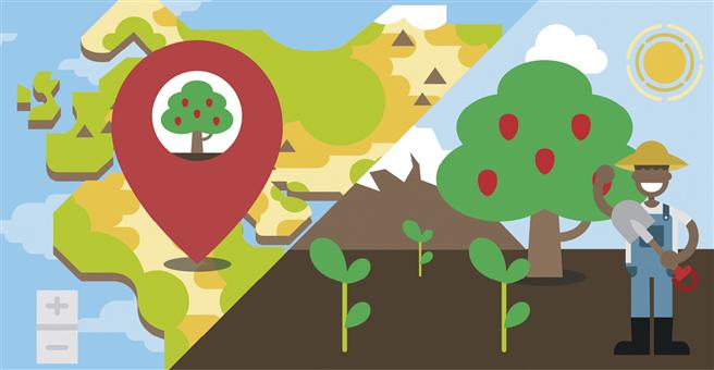 Das Internet machts möglich: Sie lassen einen Baum pflanzen und sehen ihm anschließend beim Wachsen zu. © Treedom