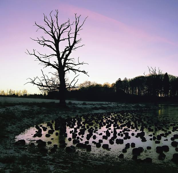 Seltener Anblick: Moore gelten als besonders wertvolle und empfindliche Ökosysteme. Sie sind gefährdet durch großflächige Trockenlegungen. Biodiversitäts-Offsets, für die Unternehmen zahlen, sollen einen Ausgleich für 'verbrauchte' Natur bieten. © Martin Gebhardt, pixelio.de