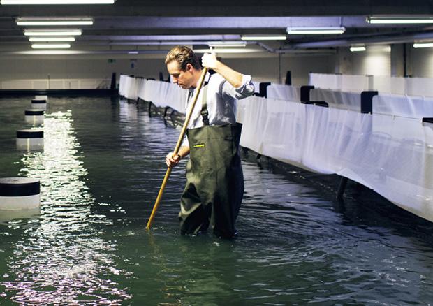 Chef Fabian Riedel steigt auch schon mal selbst in die Tanks, um seine geliebten White Tiger Prawns zu fischen. © Crusta Nova
