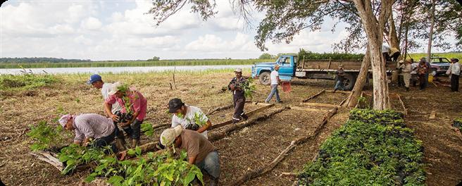 Über 14 Milliarden Bäume hat Plant-for-the-Planet weltweit schon gepflanzt – so wie hier in Mexiko. Dort stehen seit 2016 eine Million von der Initiative gesetzte Bäume. © Plant-for-the-Planet