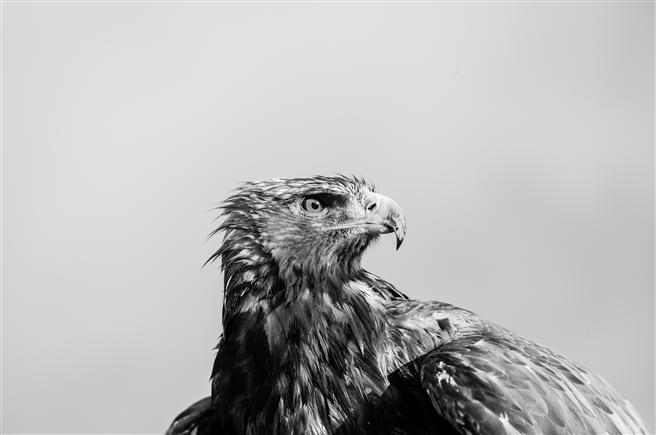 Der Adler Sky // Foto: Nomi Baumgartl
