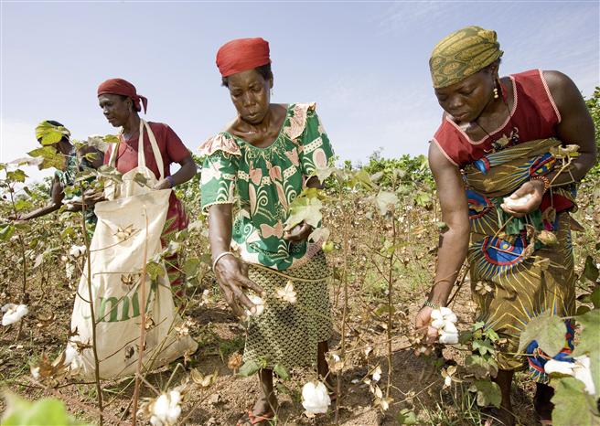 Frauen bei der Baumwollernte. © Paul Hahn für Aid by Trade Foundation