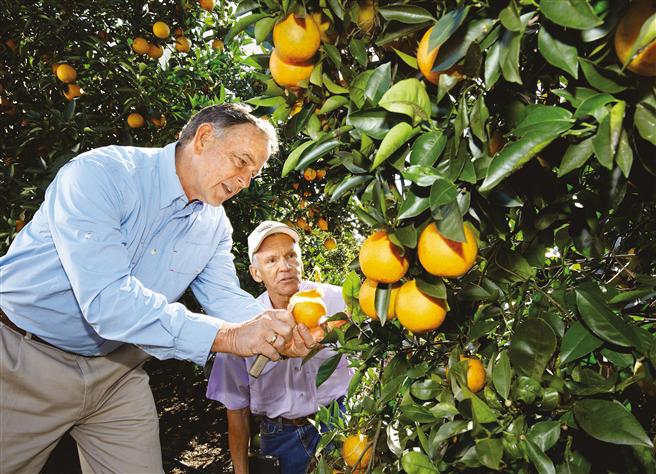 Der Zitrusfarmer David Evans (l.) begutachtet gemeinsam mit Dr. Dennis Warkentin von Bayer die Schäden an einer Plantage in Florida, USA. © Bayer AG