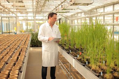 Biolaborant Frederic Bach führt diagnostische Tests im Gewächshaus des Weed Resistance Competence Center von Bayer CropScience in Frankfurt durch. Foto: © Bayer CropScience AG