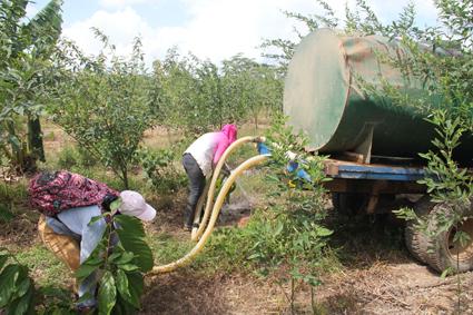Vor einem Tankwagen aus werden gezielt einzelne Kakaopflanzen bewässert. Foto: Ritter Sport