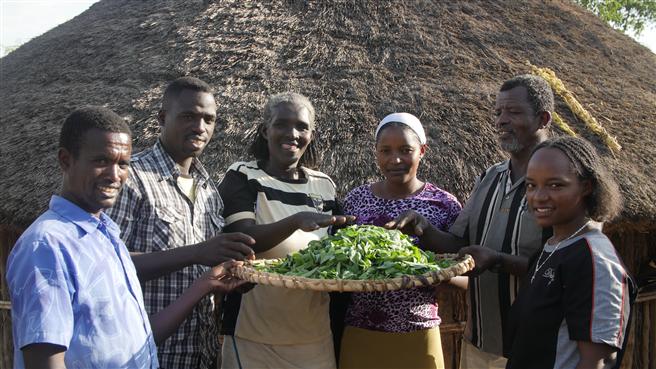 Es handelt sich um Entwicklungshilfe in einer direkten Form, die die Selbstständigkeit der afrikanischen Landwirte stärkt. Foto: Moringreen GmbH