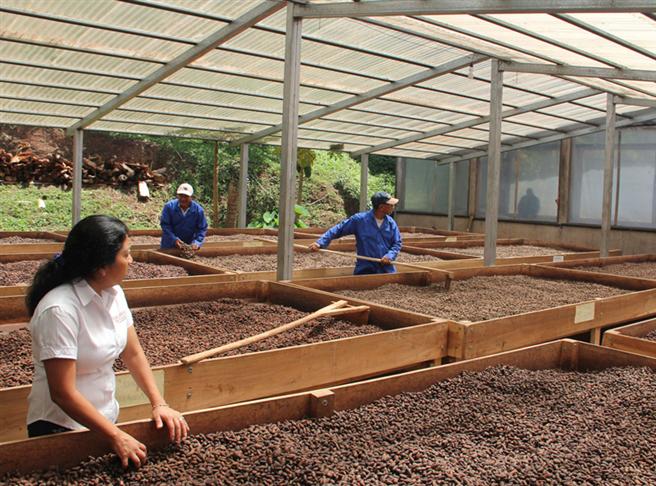 Cacao-Nica Partner bei der Trocknung des nicaraguanischen Edelkakaos. © Ritter Sport