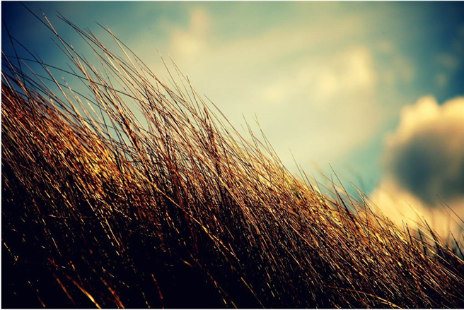 'Sommernachmittag am Meer' © Alexander Liedtke