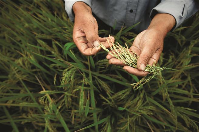 Gesucht werden innovative Ansätze im Bereich der Unkrautkontrolle sowie der Krankheits- und Schädlingsbekämpfung bei Kulturpflanzen. Foto: Bayer AG.