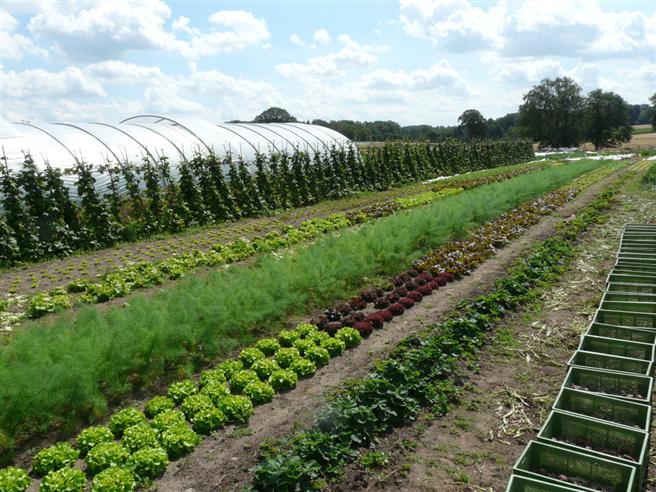Um die Felder und Gemüsebeete kümmern sich professionelle Landwirte und Gartenbauer im Auftrag der vielen verschiedenen Mitglieder. Foto: Hof Pente