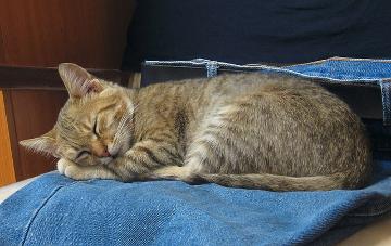 Da fühlt sich selbst die Katze wohl - es gibt zunehmend Textilprodukte, die auf nachhaltiger Basis hergestellt werden. pixabay.com © eugeniu (CCO-Lizenz)