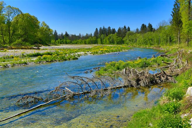 Acht Unternehmen aus dem Bayerischen Chemiedreieck, darunter Vinnolit, unterstützen mit ihrem Verein die Renaturierung der Alz. (Bild: Verein Naturnahe Alz)