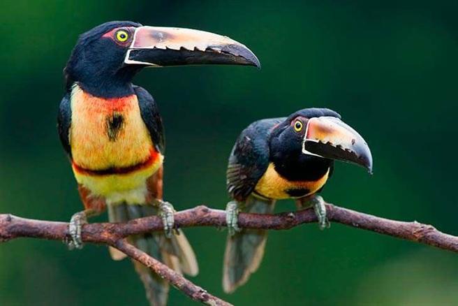 Entdecken Sie die artenreiche Tierwelt von Costa Rica mit Fairaway. Foto: Fairaway Travel GmbH