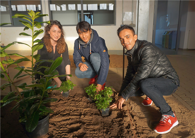 Die Willkommenslotsin Özge Acar assistiert Walid Nawabi (17) und Fahim Mohammed (18) beim Pflanzen von Bodendeckern. Fotos v.li.n.re: Kottich