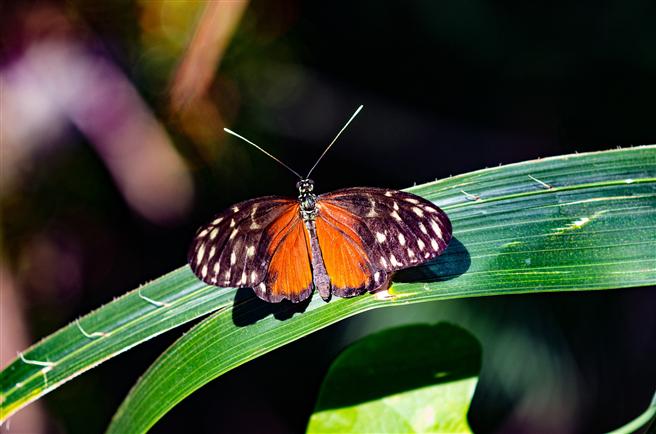 Die globale Bestandsaufnahme zur biologischen Vielfalt ist angelaufen. © pixabay.com