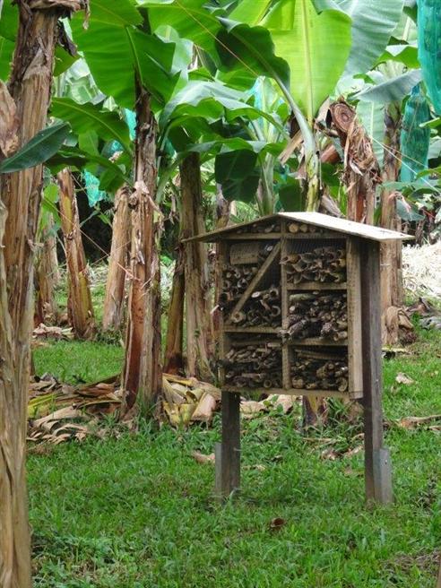 Insektenhotel im Bananenhain © PRS