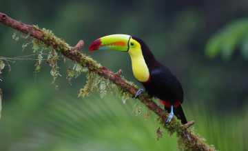 Eine neue Reise führt Natur- und Tierfans nach Costa Rica in ein Ökoparadies mit 350.000 Tierarten und einsamen Stränden. Foto: Wikinger-Reisen