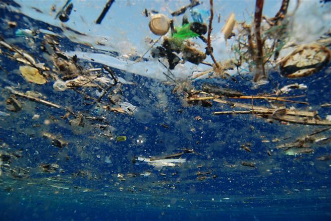 A PLASTIC OCEAN. Foto: Plastic Oceans Unlimited