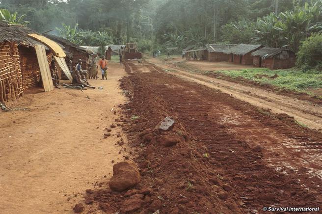 Baka und andere Völker wurden mit Gewalt von ihrem angestammten Land vertrieben. Jetzt leben sie am Straßenrand. © Survival Interantional