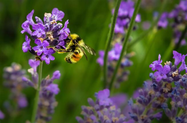 Das Projekt ''BienABest'' soll dem Bienensterben Einhalt gebieten und Artenvielfalt sichern © Jenna Lee/Unsplash
