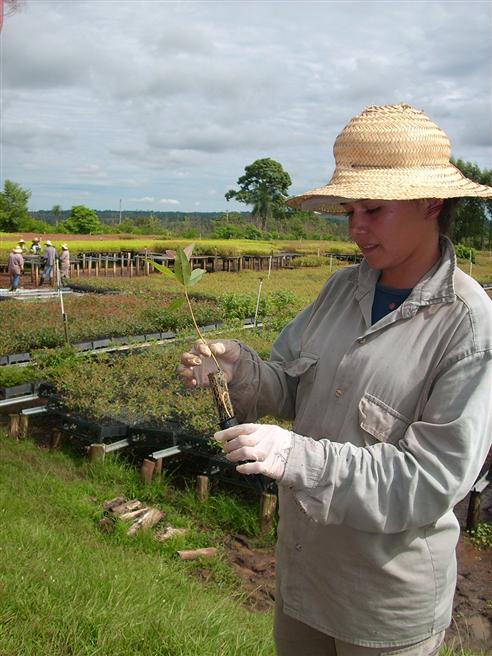 Eine Mitarbeiterin prüft eine Jungpflanze in der Pflanzschule in Paraguay. © Miller Forest