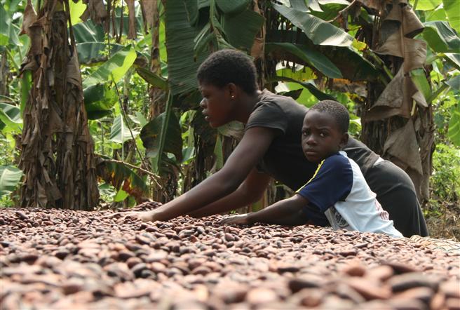 Kind hilft auf der Farm der Eltern beim Trocknen der Bohnen, Ghana © Südwind/Christina Schröder