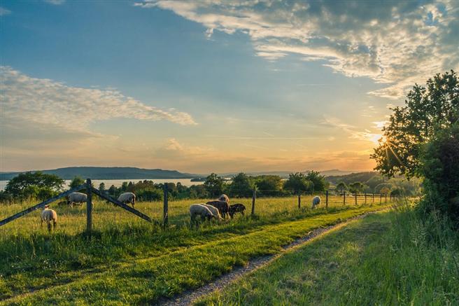 Manche Wiesen werden nur einmal im Jahr von Schafen beweidet und nicht gedüngt. Das ist die geringste Form der Bewirtschaftung von Grünland. © hschmider, pixabay