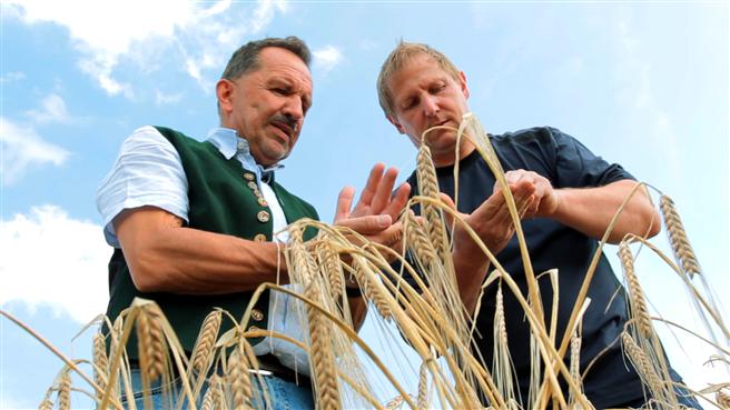 Braumeister Hans-Jürgen Iwan und Landwirt Kaspar Höcher bei der Gerstenbeschau auf dem Feld. © Ayinger Privatbrauerei