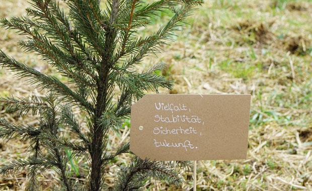 Mit dem Titel 'Waldhauptstadt' erhalten Städte und Gemeinden die Möglichkeit, ihre nachhaltige und vorbildliche Waldbewirtschaftung in der Öffentlichkeit bekannt zu machen und der lokalen und regionalen Bevölkerung zu veranschaulichen. © PEFC Deutschland e.V.