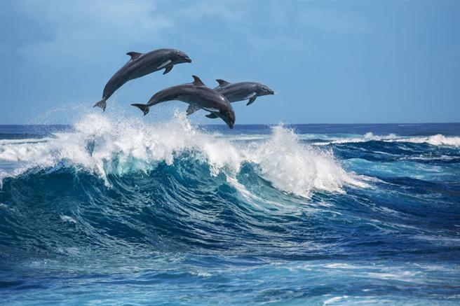 Wo sind die Grenzen im Umgang mit Delphinen? © fotolia