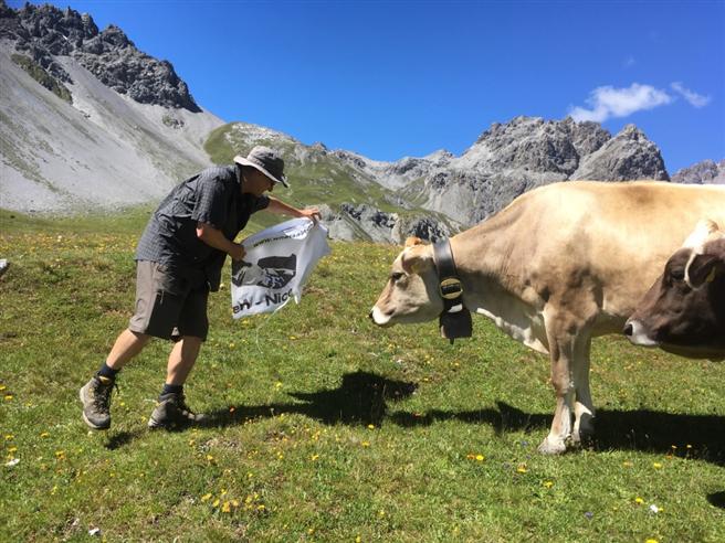 Ein Alpenklassiker: Auf Du und Du mit der Kuh. © Anke Biedenkapp