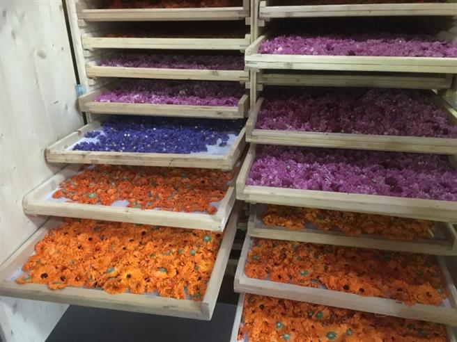 Getrocknete Blüten haben gute Chancen, später als Mitbringsel in Form von Tee im Reisegepäck der Gäste zu landen – oder als (Salat-)Dekoration auf den Tischen. © Anke Biedenkapp