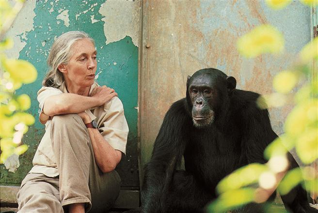 Die Dr. Jane Goodall Institute setzt sich nicht nur für Natur- und Artenschutz, sondern auch für nachhaltige Entwicklung und globale Entwicklungszusammenarbeit ein.© Michael Neugebauer