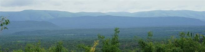 Neben der Aufforstung liegt der Fokus des Engagements in der Walderhaltung. © Carbon Tanzania