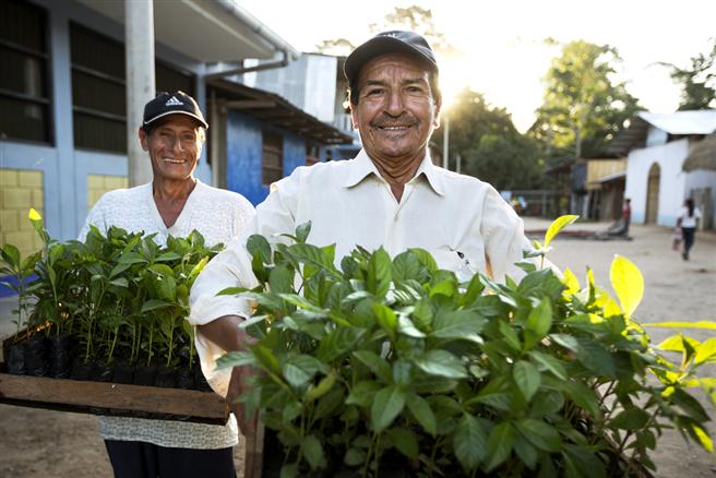 Bauern mit jungen Setzlingen in der Region Pajarillo, San Martin © Gifts for Change / PUR Projet