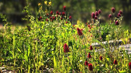 Blumenwiese der BKK ProVita ©BKK ProVita