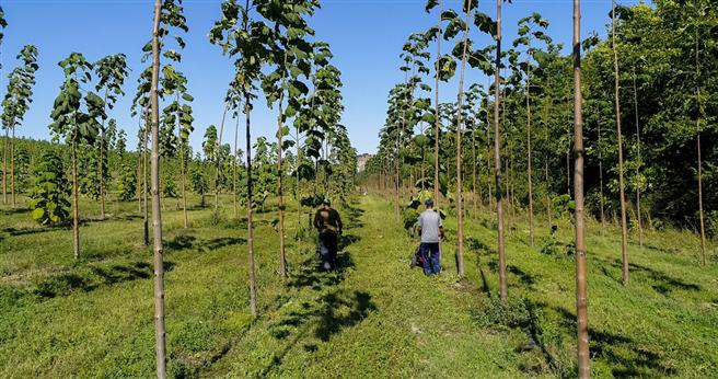 Anbau der Kaiserbäume. © PLAN 8 GmbH