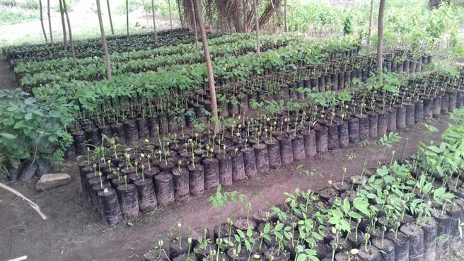 Auf der Togo-Reise werden die Teilnehmer auch lokale Baumschulen besuchen. © 2018 natureOffice GmbH