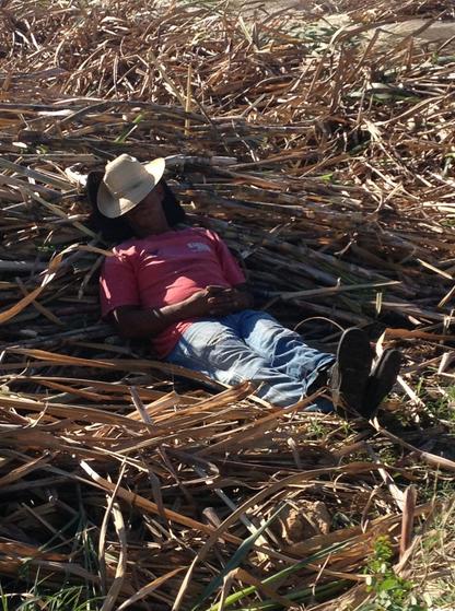 Erdöl und Kunstdünger sind die Grundlage der kubanischen Landwirtschaft. Fällt beides weg, ist die Kreativität der Menschen wieder gefragt – und die Verbindung mit dem Boden und den selbst produzierten Nahrungsmitteln schafft Zufriedenheit. © Anke Biedenkamp