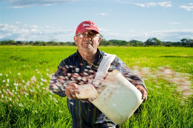 Kolumbianischer Bauer bei der Aussaat von Reis. © eliasfalla, pixabay.com