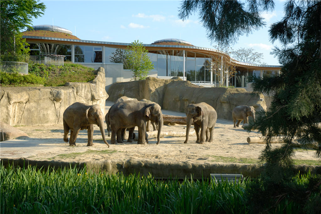 Elephants are the symbol of wisdom and strength. © Kölner Zoo