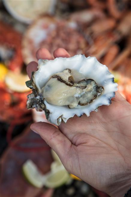 Austern ernten auf Texel © DO WAD