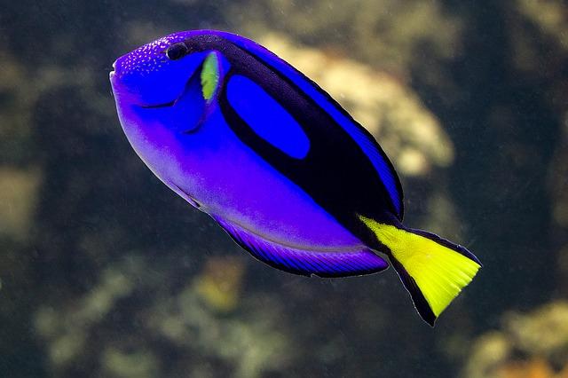 Anlässlich des Internationalen Tages des Artenschutzes fordert Pro WIldlife, den Fang von Korallenfischen für Heimaquarien stärker zu regulieren. © domeckopol, pixabay.com