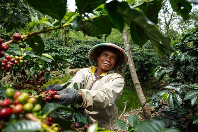 Fairtrade veröffentlicht überarbeiteten Standard für kleinbäuerliche Organisationen, um wirtschaftliche Stabilität von Kleinbauern zu verbessern. © Nathalie Bertrams