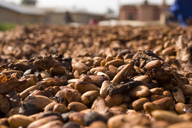 The ISO 34101 series aims to encourage the professionalization of cocoa farming. © dghchocolatier, pixabay.com