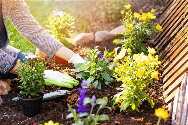 Mit gutem Gewissen gärtnern: toom stellt bis 2025 sein gesamtes Erdensortiment auf torffreie Alternativen um. © toom / GettyImages