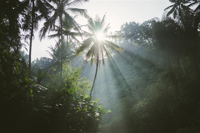 Das Projekt 'Madre de Dios' setzt sich für den Erhalt von 112.500 Hektar peruanischen Regenwaldes, den Schutz von 65 gefährdeten Tier - und Pflanzenarten sowie den Schutz der dort lebenden indigenen Völker ein. © FTP Edelman